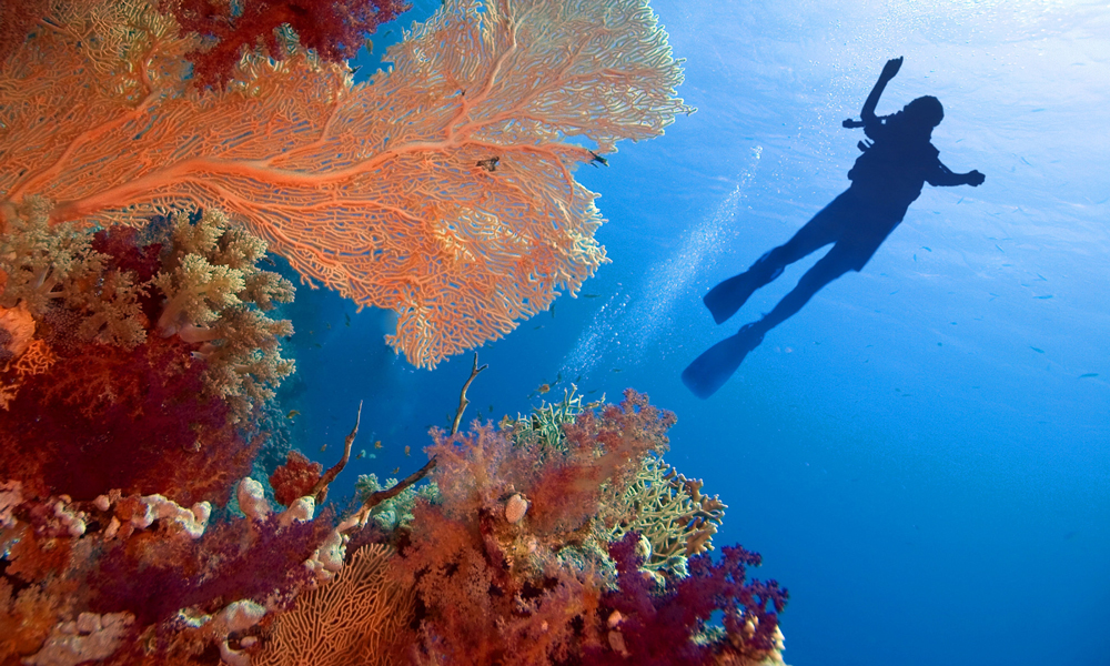 Red Sea Facts - Egypt Tours Portal