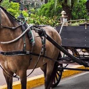 Aswan Horse Carriage Trip